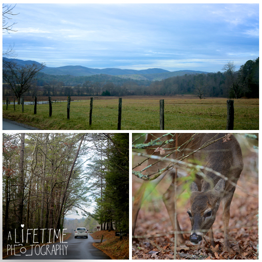 Cades-Cove-Marriage-Wedding-Proposal-Photographer-couple-Townsend-Pigeon-Forge-Gatlinburg-Smoky-Mountains-engagement-1