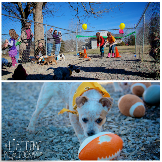 Pets-without-parents-puppy-super-bowl-puppybowl-party-Sevierville-TN-dogs-adoption-animal-shelter-4
