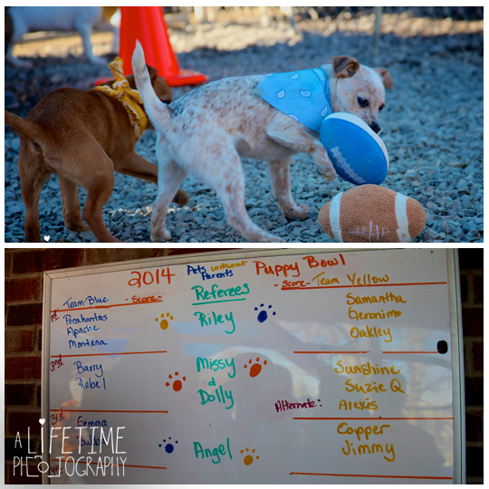 Pets-without-parents-puppy-super-bowl-puppybowl-party-Sevierville-TN-dogs-adoption-animal-shelter-7