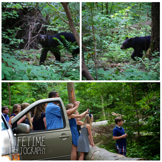 Roaring-Fork-Motor-Nature-Trail-Family-Photos-In-the-Great-Smoky-Mountain-National-Park-Photographer-Family-Reunion-Gatlinburg-Knoxville-Pigeon-Forge-GSMNP-4