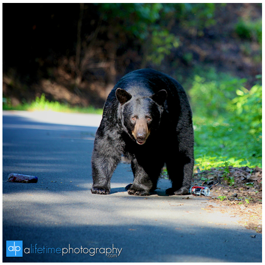 smoky-mountain-bears-photography-photographer-see-spot-wildlife-baby-cubs-mother-trash-Gatlinburg-Pigeon-Forge-digging-black-9